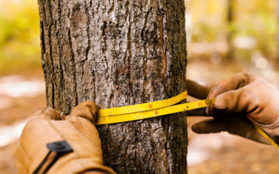 How To Properly Measure Your Tree For Merit Injections