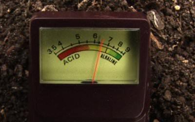 Soil Testing at Home!